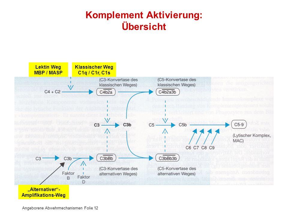 Angeborene Abwehrmechanismen Folie 12 Komplement Aktivierung: Übersicht Klassischer Weg C1q / C1r, C1s Lektin Weg MBP / MASP Alternativer- Amplifikati