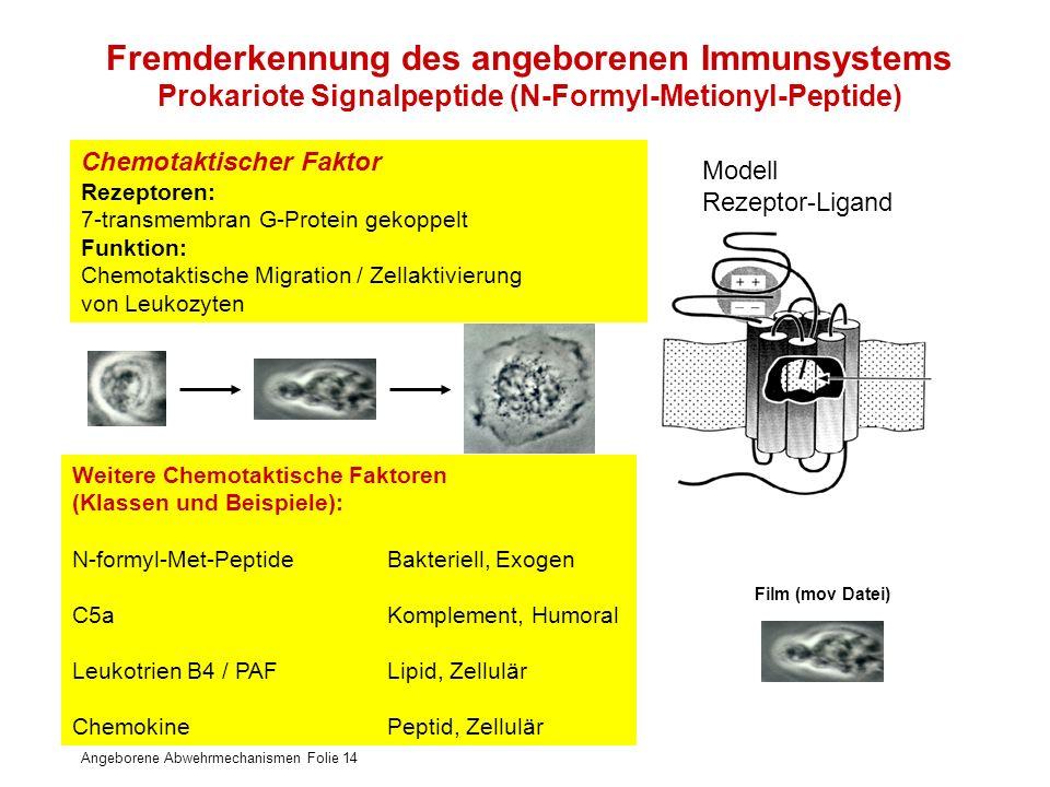 Angeborene Abwehrmechanismen Folie 14 Chemotaktischer Faktor Rezeptoren: 7-transmembran G-Protein gekoppelt Funktion: Chemotaktische Migration / Zella