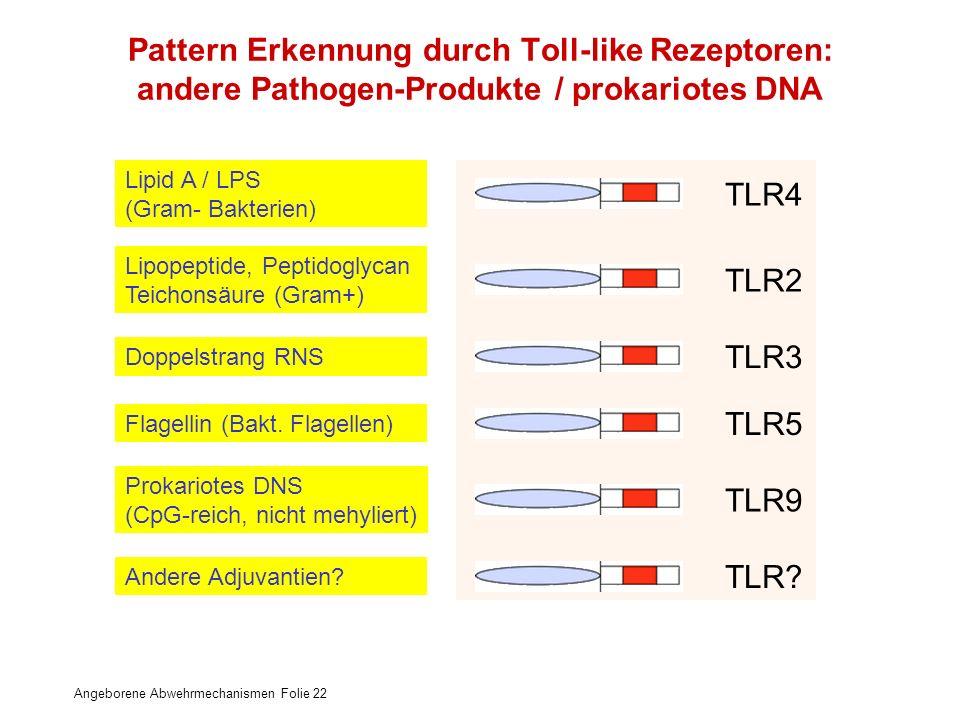 Angeborene Abwehrmechanismen Folie 22 Pattern Erkennung durch Toll-like Rezeptoren: andere Pathogen-Produkte / prokariotes DNA Lipid A / LPS (Gram- Ba