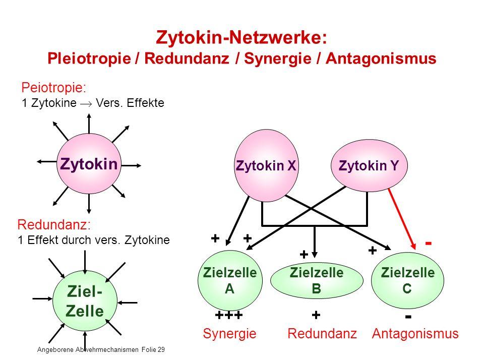 Angeborene Abwehrmechanismen Folie 29 ++ + - Zytokin-Netzwerke: Pleiotropie / Redundanz / Synergie / Antagonismus Zytokin Ziel- Zelle Peiotropie: 1 Zy
