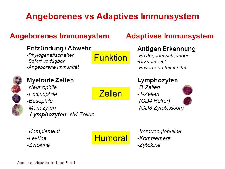 Angeborene Abwehrmechanismen Folie 4 Angeborenes vs Adaptives Immunsystem Entzündung / Abwehr -Phylogenetisch älter -Sofort verfügbar -Angeborene Immu