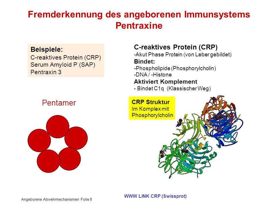 Angeborene Abwehrmechanismen Folie 8 WWW LINK CRP (Swissprot) Fremderkennung des angeborenen Immunsystems Pentraxine C-reaktives Protein (CRP) -Akut P