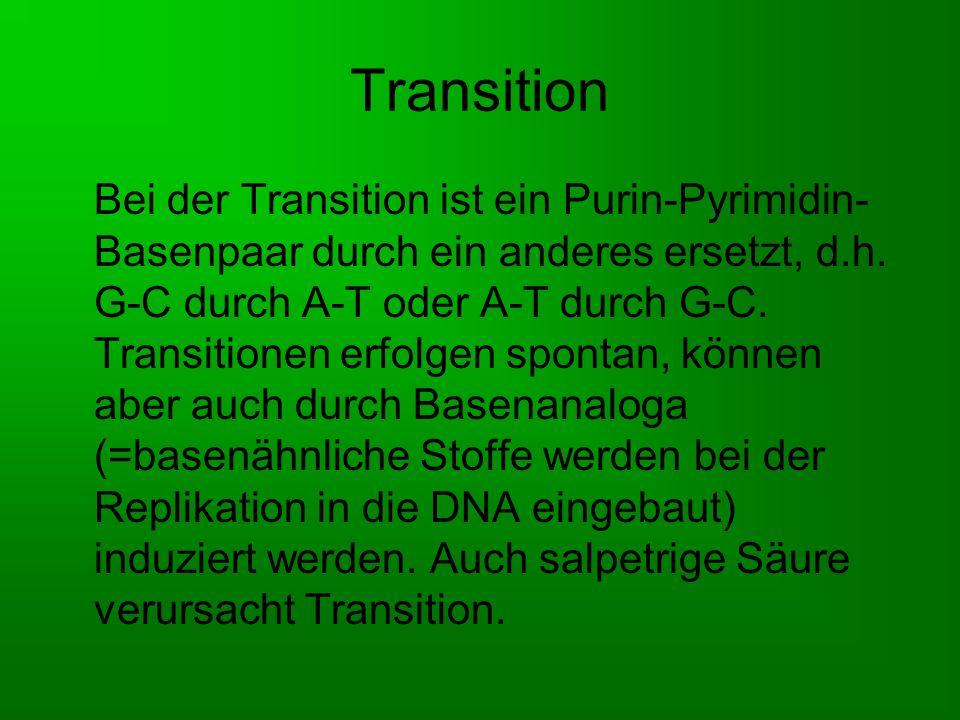 Transversion Bei der Transversion wird ein Purin- Pyrimidin-Basenpaar durch ein Pyrimidin- Purin-Basenpaar ersetzt.