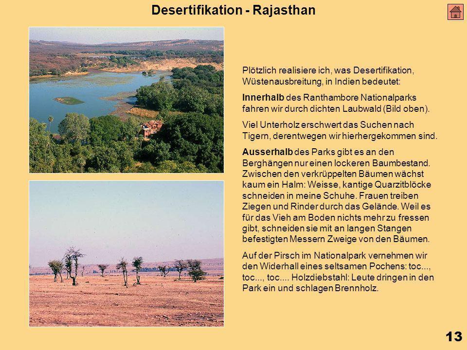 13 Desertifikation - Rajasthan Plötzlich realisiere ich, was Desertifikation, Wüstenausbreitung, in Indien bedeutet: Innerhalb des Ranthambore Nationalparks fahren wir durch dichten Laubwald (Bild oben).