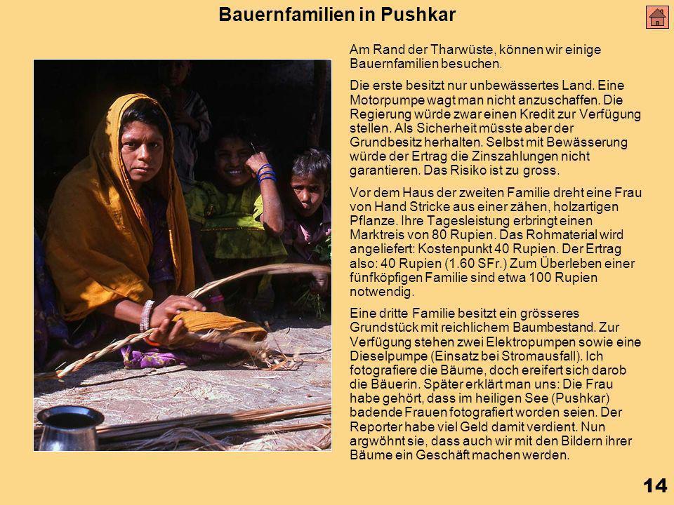 14 Bauernfamilien in Pushkar Am Rand der Tharwüste, können wir einige Bauernfamilien besuchen.