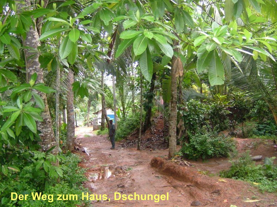 Der Weg zum Haus, Dschungel
