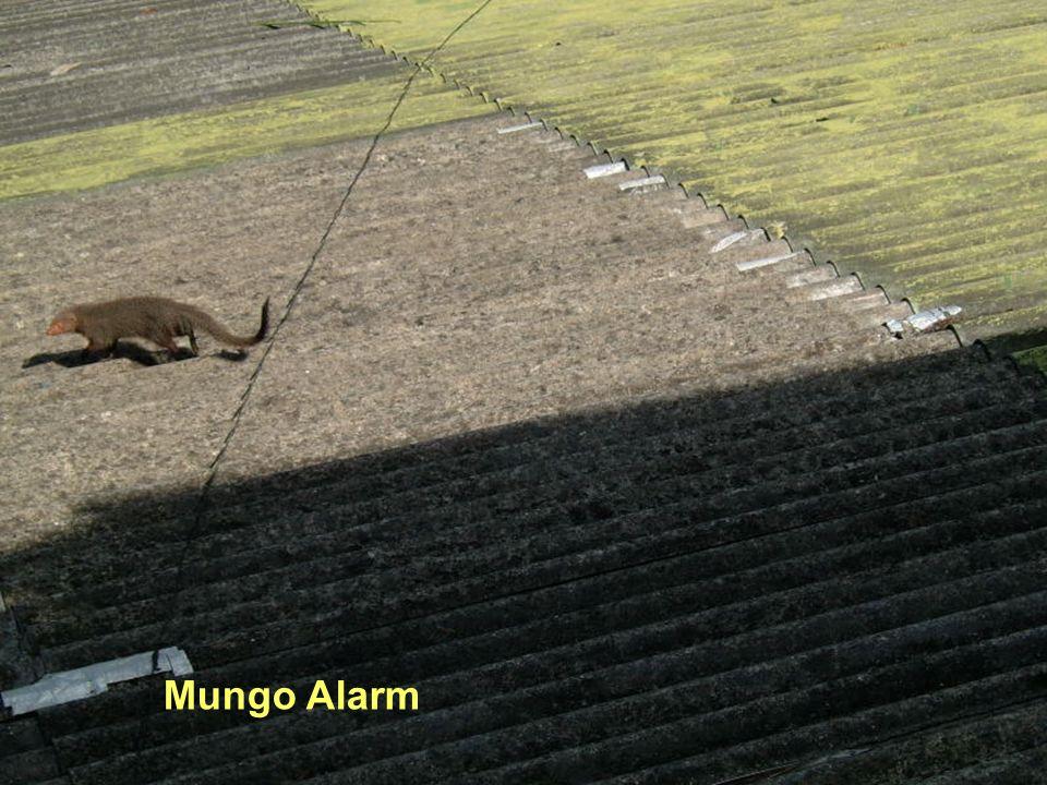 Mungo Alarm