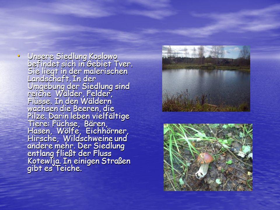 Unsere Siedlung Koslowo befindet sich in Gebiet Tver. Sie liegt in der malerischen Landschaft. In der Umgebung der Siedlung sind reiche Wälder, Felder