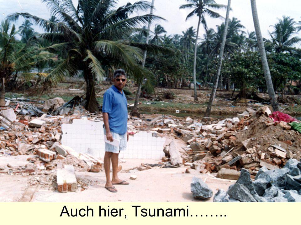 Auch hier, Tsunami……..