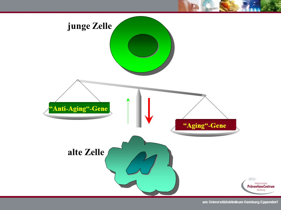 am Universitätsklinikum Hamburg-Eppendorf junge Zelle alte Zelle Aging-Gene Anti-Aging-Gene