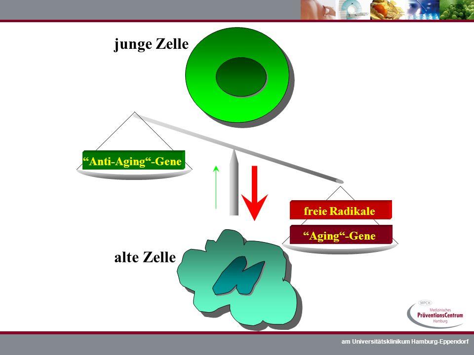 am Universitätsklinikum Hamburg-Eppendorf junge Zelle alte Zelle Anti-Aging-Gene Aging-Gene freie Radikale