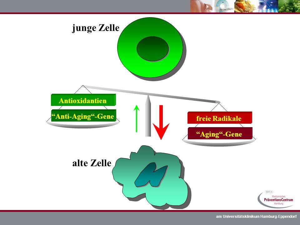 am Universitätsklinikum Hamburg-Eppendorf junge Zelle alte Zelle Aging-Gene freie Radikale Anti-Aging-Gene Antioxidantien