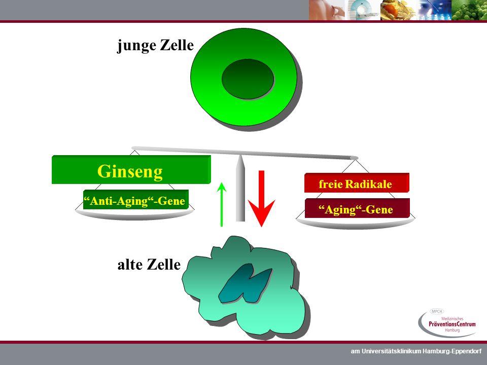 am Universitätsklinikum Hamburg-Eppendorf junge Zelle alte Zelle Aging-Gene freie Radikale Anti-Aging-Gene Ginseng