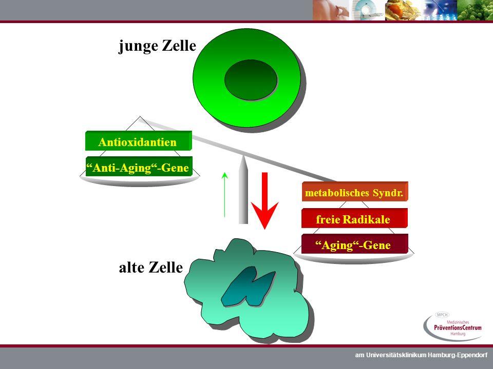 am Universitätsklinikum Hamburg-Eppendorf junge Zelle alte Zelle Anti-Aging-Gene Aging-Gene freie Radikale metabolisches Syndr. Antioxidantien