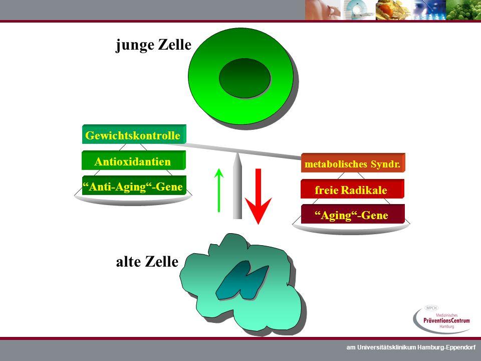 am Universitätsklinikum Hamburg-Eppendorf junge Zelle alte Zelle Aging-Gene freie Radikale Anti-Aging-Gene Antioxidantien metabolisches Syndr. Gewicht