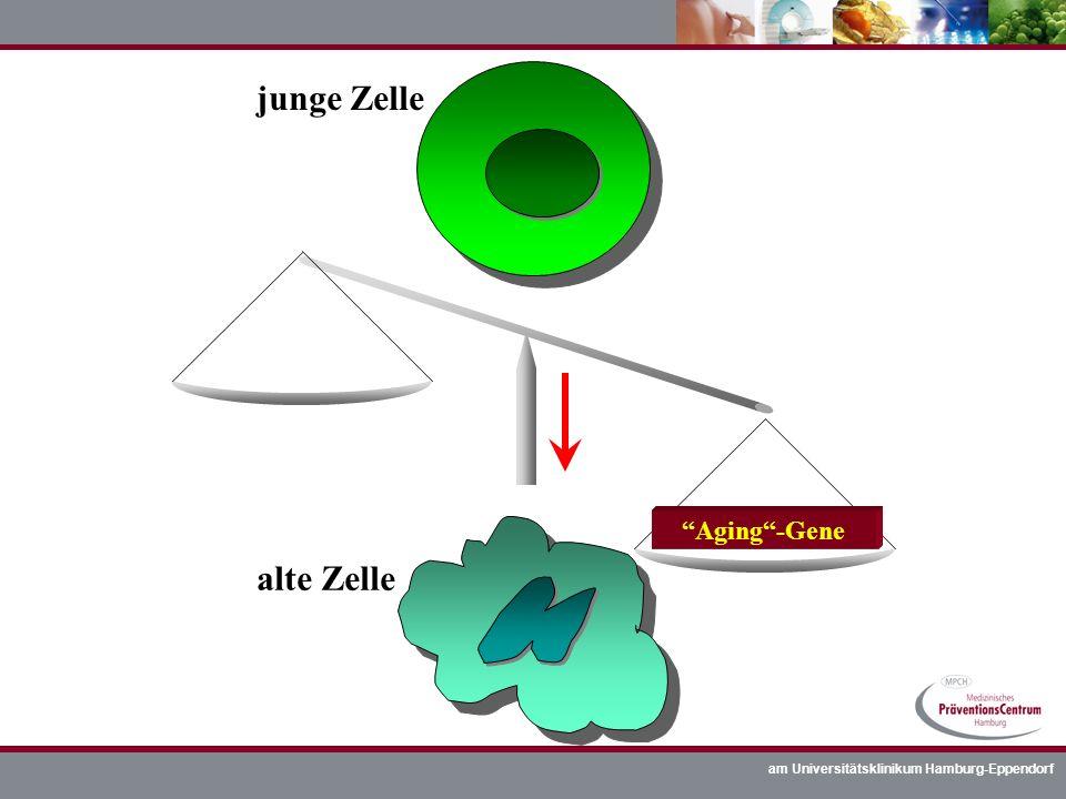 am Universitätsklinikum Hamburg-Eppendorf junge Zelle alte Zelle Aging-Gene