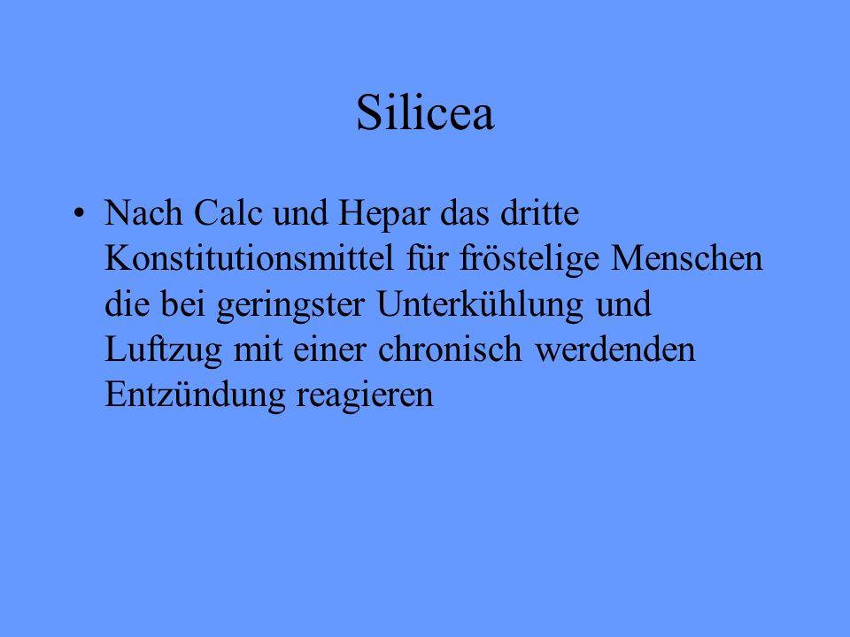 Silicea Nach Calc und Hepar das dritte Konstitutionsmittel für fröstelige Menschen die bei geringster Unterkühlung und Luftzug mit einer chronisch wer