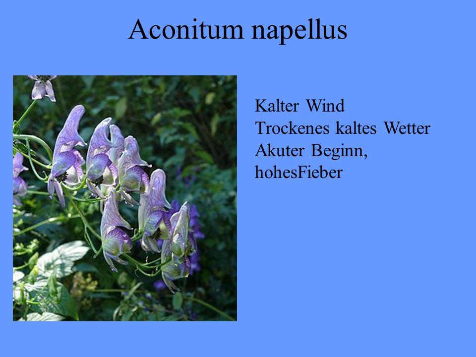 Aconitum napellus Kalter Wind Trockenes kaltes Wetter Akuter Beginn, hohesFieber