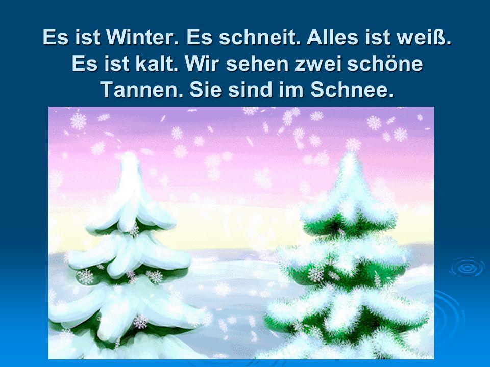 Es ist Winter. Es schneit. Alles ist weiß. Es ist kalt. Wir sehen zwei schöne Tannen. Sie sind im Schnee.