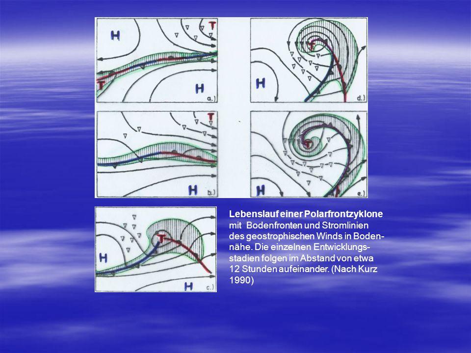 Lebenslauf einer Polarfrontzyklone mit Bodenfronten und Stromlinien des geostrophischen Winds in Boden- nähe. Die einzelnen Entwicklungs- stadien folg