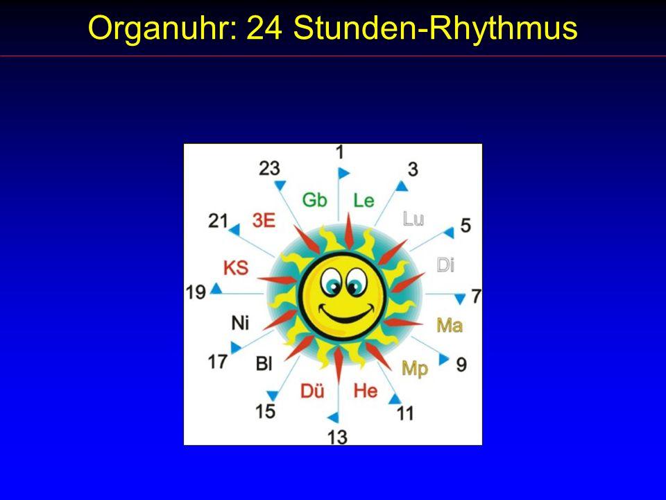 Organuhr: 24 Stunden-Rhythmus
