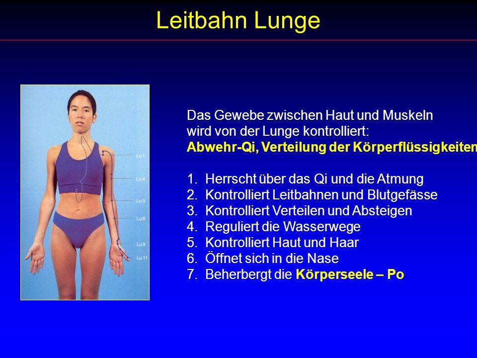 Leitbahn Lunge Das Gewebe zwischen Haut und Muskeln wird von der Lunge kontrolliert: Abwehr-Qi, Verteilung der Körperflüssigkeiten 1. Herrscht über da