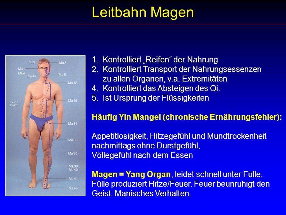 Leitbahn Magen 1. Kontrolliert Reifen der Nahrung 2. Kontrolliert Transport der Nahrungsessenzen zu allen Organen, v.a. Extremitäten 4. Kontrolliert d