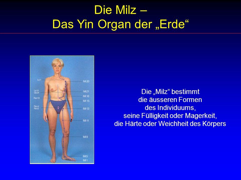 Die Milz – Das Yin Organ der Erde Die Milz bestimmt die äusseren Formen des Individuums, seine Fülligkeit oder Magerkeit, die Härte oder Weichheit des Körpers