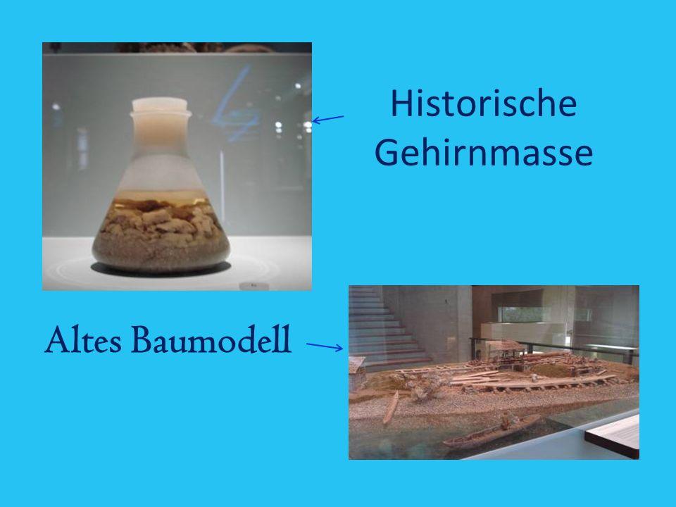 Historische Gehirnmasse Altes Baumodell