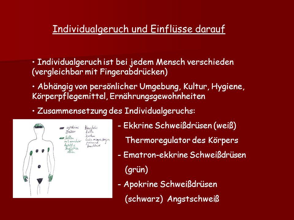 Individualgeruch und Einflüsse darauf Individualgeruch ist bei jedem Mensch verschieden (vergleichbar mit Fingerabdrücken) Abhängig von persönlicher Umgebung, Kultur, Hygiene, Körperpflegemittel, Ernährungsgewohnheiten Zusammensetzung des Individualgeruchs: - Ekkrine Schweißdrüsen (weiß) Thermoregulator des Körpers - Ematron-ekkrine Schweißdrüsen (grün) - Apokrine Schweißdrüsen (schwarz) Angstschweiß