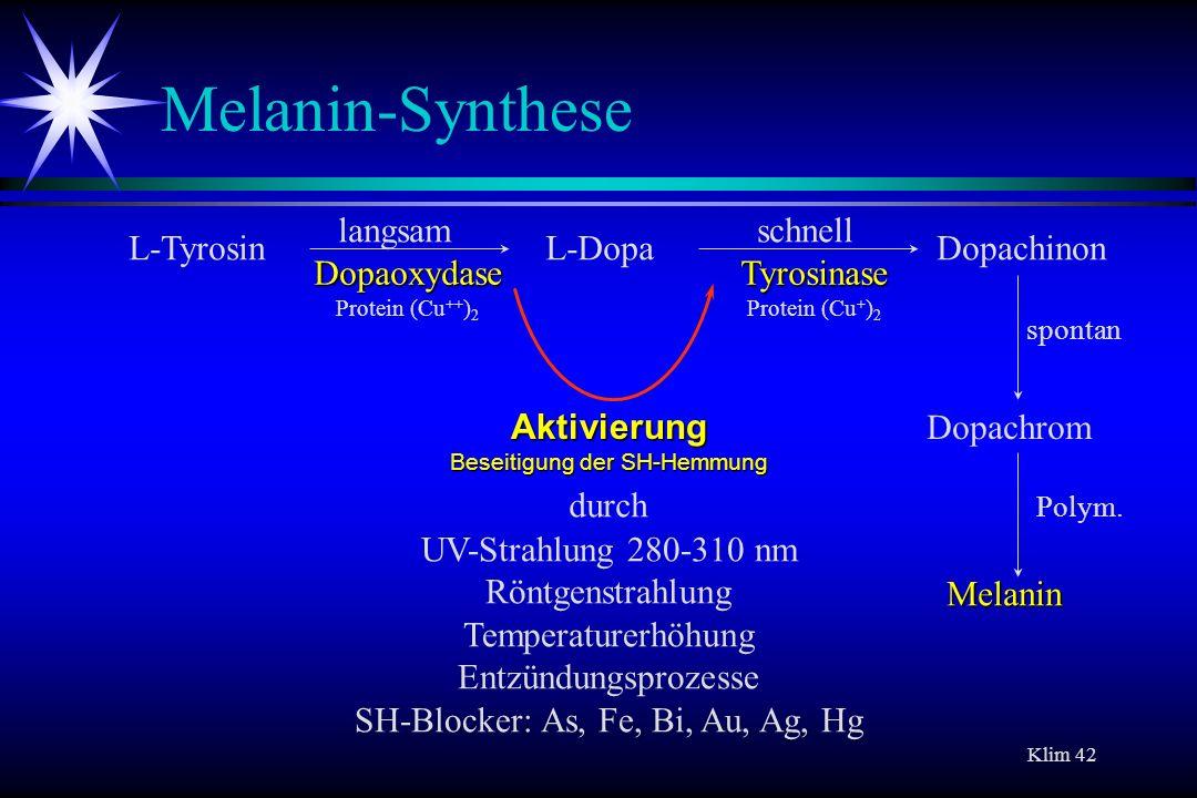 Klim 42 Melanin-Synthese L-TyrosinL-DopaDopachinon Dopachrom langsamschnell spontan Dopaoxydase Dopaoxydase Protein (Cu ++ ) 2 Aktivierung Beseitigung