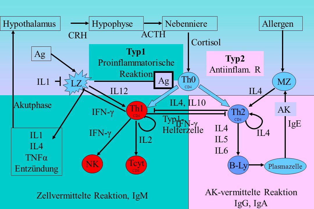 Typ2- Helferzelle Undifferenzierte T-Zelle Killerzellen AK-vermittelte Reaktion IgG, IgA Typ2 Antiinflam. R Zellvermittelte Reaktion, IgM Typ1 Proinfl