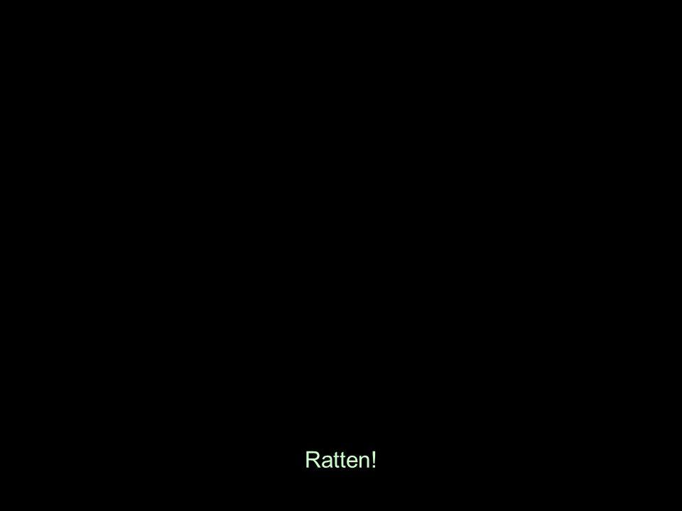 Ratten!