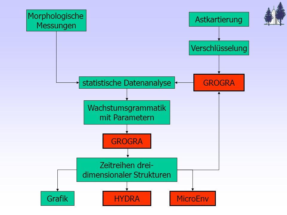 Morphologische Messungen Astkartierung Verschlüsselung GROGRA statistische Datenanalyse Wachstumsgrammatik mit Parametern GROGRA Zeitreihen drei- dimensionaler Strukturen HYDRA Grafik MicroEnv