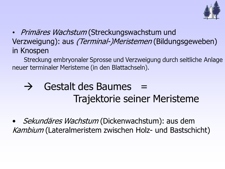 Primäres Wachstum (Streckungswachstum und Verzweigung): aus (Terminal-)Meristemen (Bildungsgeweben) in Knospen Streckung embryonaler Sprosse und Verzweigung durch seitliche Anlage neuer terminaler Meristeme (in den Blattachseln).