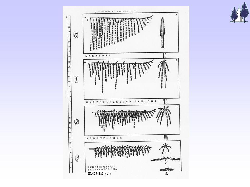 Software zur Umsetzung: GROGRA = Growth Grammar Interpreter (Kurth 1994, 1999) Analyse Simulation verzweigter Strukturen im 3D-Raum Regelsystem (Wachstums- grammatik) grammar interpreter Beschreibungs- parser (Zeitreihe von) geometrische(n) Struktur(en) Analyse- tools Graphik- interface Schnittstellen zu anderer Software Beschreibung eines realen Baumes statistische Analyse- software AMAP HYDRA GROBOL GroDisc....