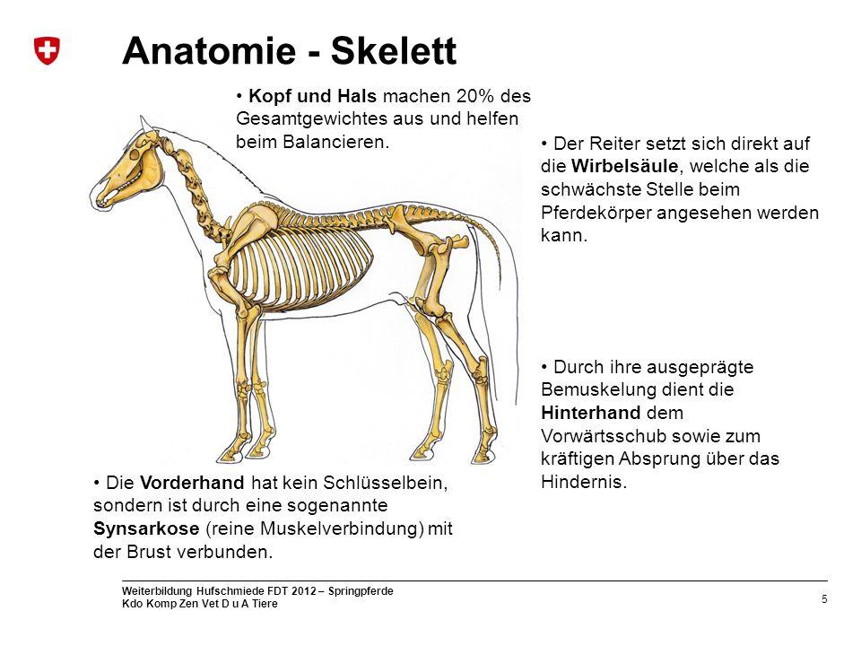 5 Weiterbildung Hufschmiede FDT 2012 – Springpferde Kdo Komp Zen Vet D u A Tiere Anatomie - Skelett Kopf und Hals machen 20% des Gesamtgewichtes aus u