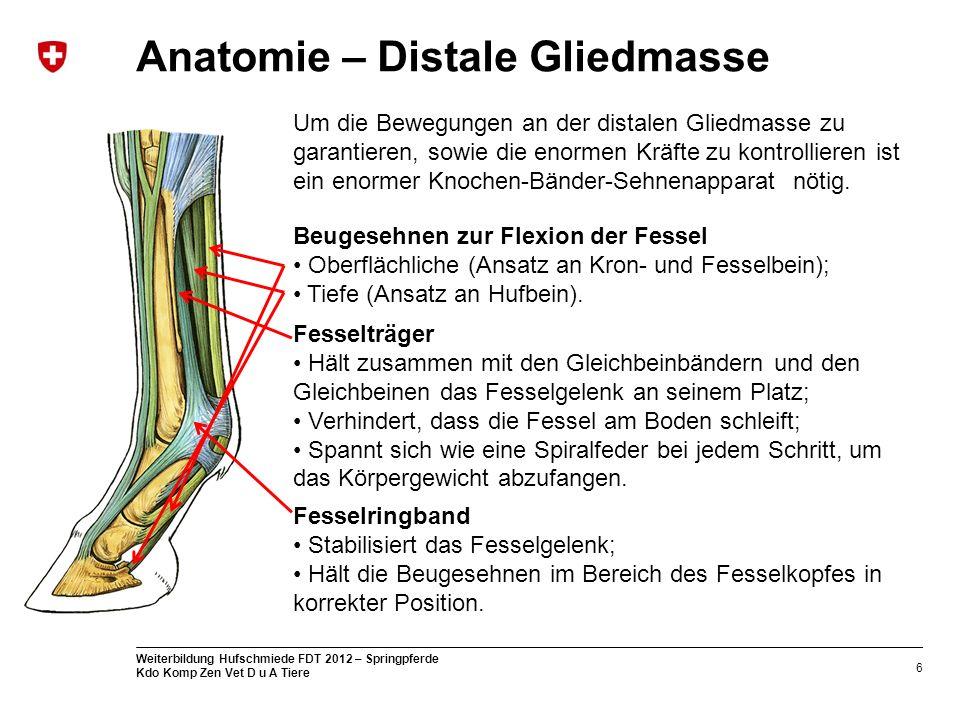 6 Weiterbildung Hufschmiede FDT 2012 – Springpferde Kdo Komp Zen Vet D u A Tiere Anatomie – Distale Gliedmasse Um die Bewegungen an der distalen Glied