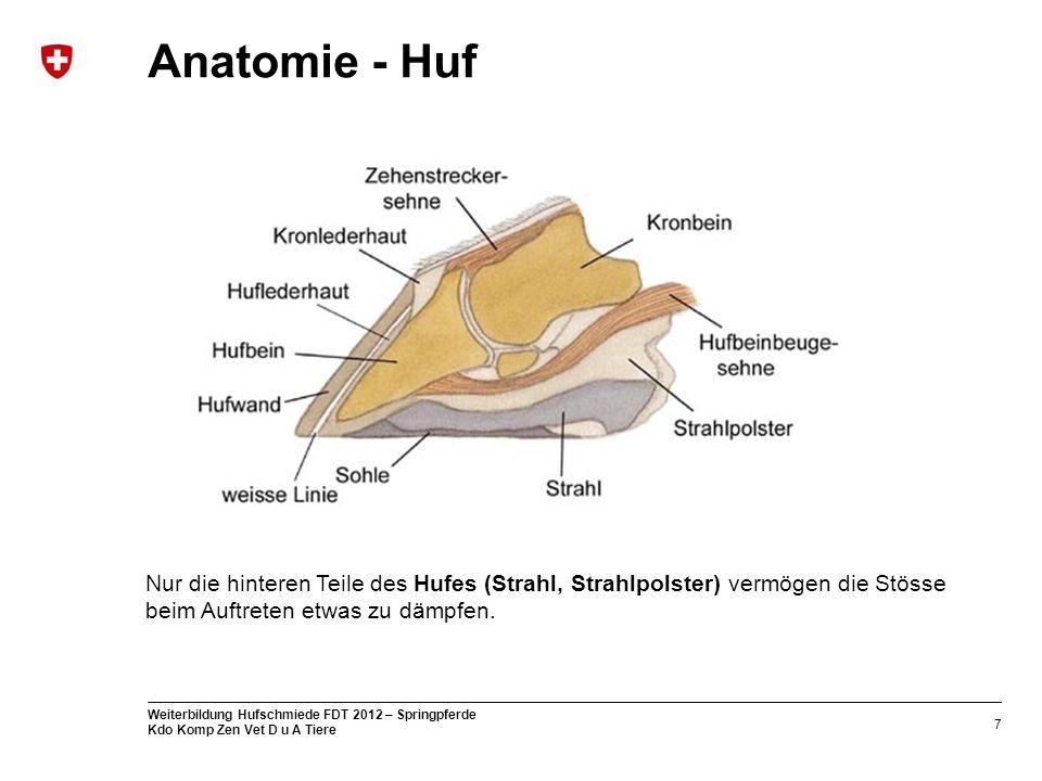 7 Weiterbildung Hufschmiede FDT 2012 – Springpferde Kdo Komp Zen Vet D u A Tiere Anatomie - Huf Nur die hinteren Teile des Hufes (Strahl, Strahlpolste