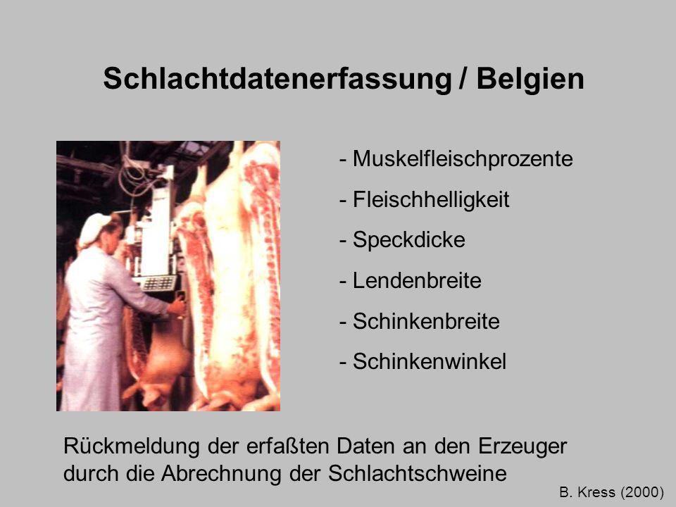 Schlachtdatenerfassung / Belgien - Muskelfleischprozente - Fleischhelligkeit - Speckdicke - Lendenbreite - Schinkenbreite - Schinkenwinkel Rückmeldung