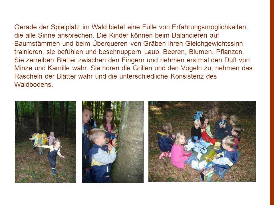 Gerade der Spielplatz im Wald bietet eine Fülle von Erfahrungsmöglichkeiten, die alle Sinne ansprechen. Die Kinder können beim Balancieren auf Baumstä