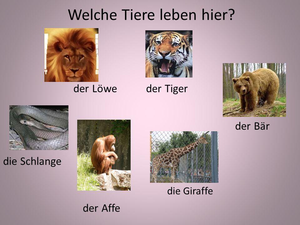Welche Tiere leben hier der Löweder Tiger die Schlange der Affe der Bär die Giraffe