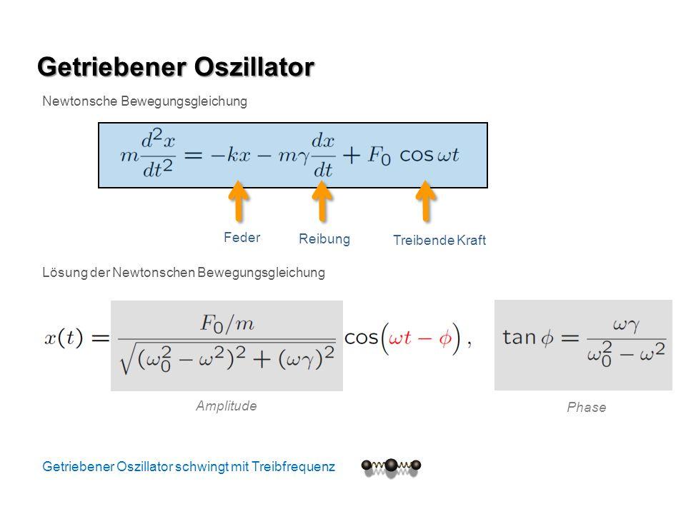 Getriebener Oszillator Newtonsche Bewegungsgleichung Feder Reibung Treibende Kraft Lösung der Newtonschen Bewegungsgleichung Amplitude Phase Getrieben