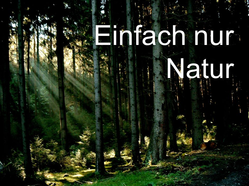 copyright rainer brämer 2010 Einfach nur Natur