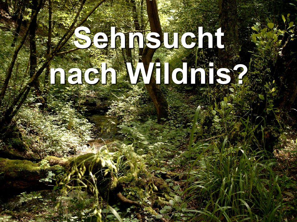 copyright rainer brämer 2009 Sehnsucht nach Wildnis ?