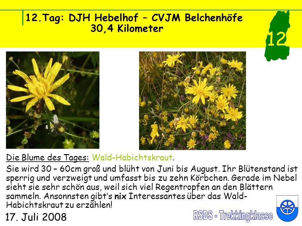 12.Tag: DJH Hebelhof – CVJM Belchenhöfe 30,4 Kilometer 17. Juli 2008 12 Die Blume des Tages: Wald-Habichtskraut. Sie wird 30 – 60cm groß und blüht von