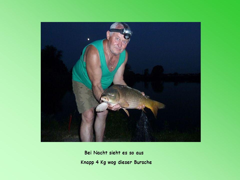 Der erste brachte ein Gewicht von 2,5 kg Ein Schuppenkarpf……ein Fang von Christian