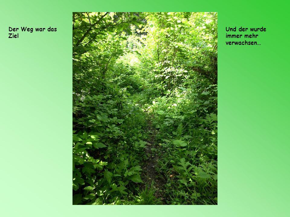 Es sollte zum Spechtensee gehen Leider im Wald abgebrochen, da die Bremsen beide aufsaugen wollten