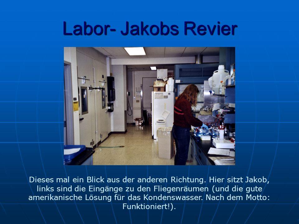 Labor- Jakobs Revier Dieses mal ein Blick aus der anderen Richtung.