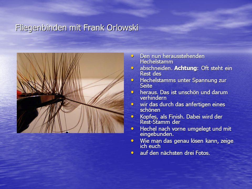 Wolly Worm Als erstes umfaßt Ihr die gesamte Als erstes umfaßt Ihr die gesamte Fliege von hinten,...